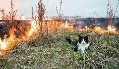 At least it is warm (MarxschisM) Tags: fire burn grass old cat warm spot latvia