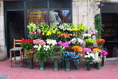 Flowers in Athens (Nicolay Abril) Tags: athens greece αθηνα ελλάδα athènes grèce athen griechenland atene grecia atina yunanistan atenas