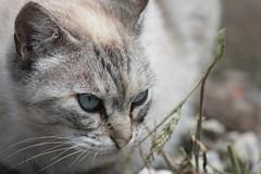 IMG_1404_1 (Pablo Alvarez Corredera) Tags: mundo rural mascota gato gata gatita dormi