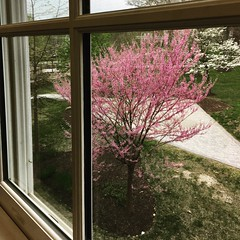 Garrison Forest ~ room with a veiw (karma (Karen)) Tags: garrisonforest owingsmills maryland baltimoreco windows trees redbud dogwood viewbeyond iphone instagram squared hww
