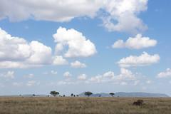 The Serengeti (virtualwayfarer) Tags: serengeti tanzania eastafrica easternafrica tanzanian nationalpark wild safari adventuresafari adventure wildlife greatmigration nature landscape mara simiyu migration unesco unescoworldheritage heritage canon canon6d lion lions