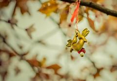 比翼双飞鸟 cute (sirenajing) Tags: bokeh closeup 50mm trees sakura cherryblossom leaves decoration handicrafts mood cute birds springtime nature park city vienna austria volksgarten plants