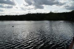 Wyndly Pool (tim ellis) Tags: suttonpark wyndleygate wyndleypool duck goose swan gull birds clouds water msh0417 msh04171 suttoncoldfield uk