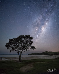Lonely Tree pt.2 (hakannedjat) Tags: tree lone lonely milkyway sonya6300 a6300 sonynz stars galaxy galacticcore astro astrophotography astonomy