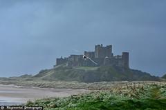 Bamburgh Castle (Digimortal-Photography) Tags: northeastengland northumbria bamburgh castle coast beach seagull northumberland
