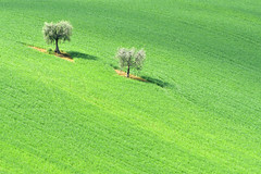 Green (luporosso) Tags: natura nature naturaleza naturalmente nikon nikond500 nikonitalia nikonclubit imdifferent alberi albero trees tree verde green minimal minimalismo minimalism marche italia italy