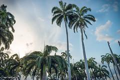 Palms (Juanpagraphics) Tags: palms palmas colombia nature sky beach playa cielo landscape sunday