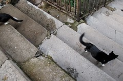 Chats (Pixeliseur) Tags: animal chats noir rue blanc monte escaliers marches fissures barrire