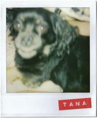 Mi pequea (Bye Bye Bird) Tags: scrapbooking polaroid tana polaroid600 savepolaroid