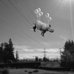 Electric Feel (Janine Graf) Tags: travel bw sunlight silly 6x6 balloons whimsy surrealism surreal powerlines rhino electricity artrage whiterhinoceros juxtaposer janine1968 blurfx iphone4s scratchcam janinegraf