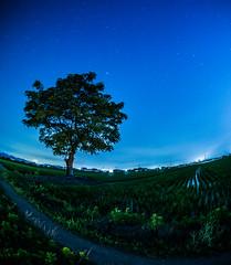 PhoTones Works #3093 (TAKUMA KIMURA) Tags: photones ep5 landscape scenery nature night scene star trees starry japan 風景 景色 自然 星 夜景 樹 木 星空 日本 takuma kimura 木村 琢磨 木村琢磨