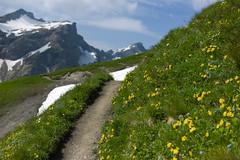 between Augstenberg & Bettlerjoch . Liechtenstein (Toni_V) Tags: mountains landscape europe hiking rangefinder trail liechtenstein wanderung wanderweg summiluxm 2013 35mmf14asph frstinginaweg 35lux toniv 130713 leicam9 l1012697 malbunmalbun malbunsareiserjochspitzaugstenbergbettlerjochtlihhimalbun 3h4min