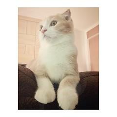 ไม่แน่ใจ ว่าเป็นแมว หรือ นกฮูก 55555+