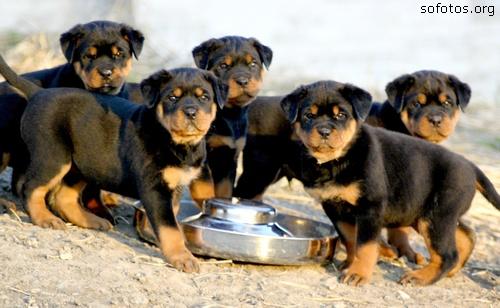Filhotes de cachorros 72