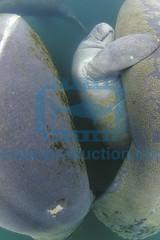 2013 06 ESK FLORIDE CRISTAL RIVER 0047
