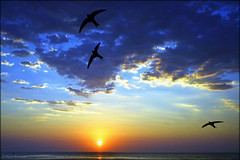 Le tierc de l'aube (bleumarie (absente dure indtermine)) Tags: orange mer 3 nature silhouette trois jaune soleil nikon lumire bleu ciel rayon nuage roussillon oiseau mouette lever aurore leverdesoleil aile levant lumineux aube mditerrane goland saintemarie catalogne pyrnesorientales voler suddelafrance tierc tt oiseaudemer bleumarie mariebousquet nikonsd3100 photomariebousquet