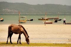Praia do Baiacu - Ilha de Itaparica-BA (Rubens Carvalho) Tags: sea mar agua barco bahia cavalos animais rubens carvalho itaparica rubenscarvalho