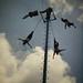 El Tajin: Totonac Voladores