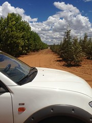 Greenwood Management Forestry investment A different Plantation Perimeter (GWD Forestry - Brazil) Tags: greenwoodmanagement eucalyptus brazil investment forestry greenwood management brasil timber timberland gwp horticultura gwm gwdforestry invest gwd