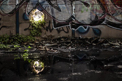 Conqute (ben0son - www.ben0son.com -) Tags: reflection abandoned water mirror decay drop reflect objets concepts urbex abandonn friche