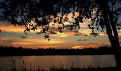 Sunset  (2013-10-08) (Blanca Rosa2008 +2,700,000 Views Thanks to All) Tags: trees light sunset sky naturaleza sun lake reflection nature yellow reflections landscape fire golden miami silhouettes thompsonpark skymiami sunsetmiami canoneos60d larrypennythompsonpark parquesmiami parksmiami landscapemiami zstincer silhouettestree vision:sunset=097