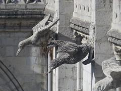 Ecuador Endemic Bird Gargoyles (Patricia Henschen) Tags: quito ecuador gargoyle basilicadelvotonacional basilicaofthenationalvow