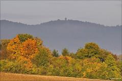 Sortie de la brume (Excalibur67) Tags: autumn trees mist mountain nature yellow forest jaune montagne automne landscape nikon lumire herbst arbres alsace paysage tamron brouillard brume d90 vosgesdunord forts sp70300divcusd