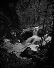 water among the trees (tayl0439) Tags: park shadow bw tree mamiya film nature water analog landscape waterfall woods long exposure falls devon national rush becky ilford rz67
