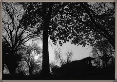 November 29th: Night of Spirits (St Andrew's night) (Ioan BACIVAROV Photography+3.500.000visitsTHANKS) Tags: tree night interesting nikon spirit andrew spirits tradition paranormal mistery andrei paranormalphenomena mistereous mygearandme ioanbacivarovsphotostream ioancbacivarov noapteasfntuluiandrei standrewsnight
