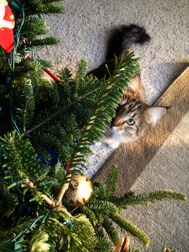 Elsie vs. The Christmas Tree