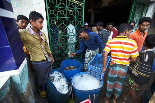 Preserving fish in buckets of crushed ice in Khulna, Bangladesh. Photo by Felix Clay/Duckrabbit.