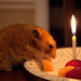 Hamster Party