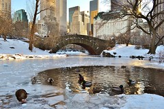 Central Park-The Pond, 01.04.14 (gigi_nyc) Tags: nyc newyorkcity winter ice nature centralpark hercules thepond
