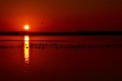 Sunrise ~ Explored ~ (shireye) Tags: red ontario birds sunrise nikon silhouettes wellington canadageese explored d7000