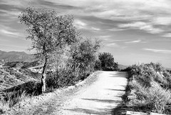 Whiting Road (EmperorNorton47) Tags: california winter blackandwhite nature digital photo afternoon trail oaks yellowfilter whitingranch portolahills scruboaks whitingranchwildernesspark whitingranchwilderness