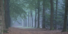Misty forest (Rene Mensen) Tags: nature misty forest nikon paths caminhos exloo pathscaminhos d5100