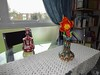 Tulipe home (Julie70 Joyoflife) Tags: flowers london spring fevrier photostroll photojuliekertesz midfebruary springwalksinlondon springflowersinfebruary
