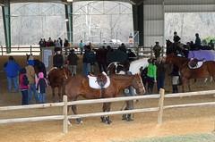 2014-03-23 (5) Prince Georges County Equestrian Center (JLeeFleenor) Tags: horses thoroughbreds equine equestrian cheval cavalo cavallo cavall caballo pferd paard perd hevonen hest hestur cal kon konj beygir capall ceffyl cuddy yarraman faras alogo soos kuda uma pfeerd koin حصان кон 马 häst άλογο סוס घोड़ा 馬 koń лошадь uppermarlboro md maryland