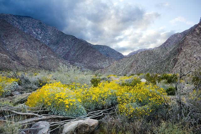 Borrego Canyon