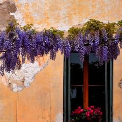 Fiorile - Floreale (Floréal) (fiumeazzurro) Tags: foto chapeau bellissima anthologyofbeauty vividstriking