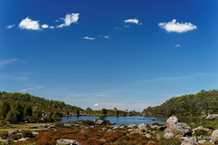 20170301-30-Light alpine scrub (Roger T Wong) Tags: australia greatpinetier np nationalpark sel70300g sony70300 sonya7ii sonyalpha7ii sonyfe70300mmf2556goss sonyilce7m2 tasmania wha wallsofjerusalem worldheritagearea bushwalk camp hike pool reflections tarn trektramp walk water