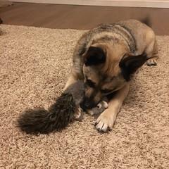 Killin' It (A Wild Western Heart) Tags: inexplore chien hund perro dog squirrel roadkill tannersquid