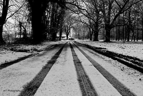 Morning Snow 2