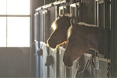 In de zon (gill4kleuren - 14 ml views) Tags: horse horses sun glow paarden
