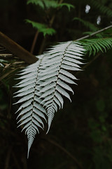 IMG_5862 (ar.long) Tags: newzealand new zealand canon 6d canon6d silverfern explorenewzealand nz explorenz 2414 24mm