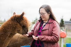 medina-7751 (FarFlungTravels) Tags: alpaca animal farm medinacounty onefineday shear wool