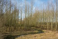Meander (stevefge) Tags: bovenleeuwen maasenwaal gelderland trees bomen water stream landscape nederland netherlands nl nature natuur nederlandvandaag reflectyourworld lente springtime
