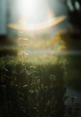 flare by L. Paul - Minolta X-700 Minolta MD 50mm 1.7 Kodak Portra 160