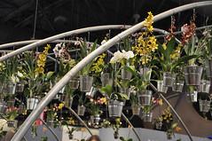 2017-03-12_0920n_waldor (lblanchard) Tags: 2017flowershow displaygarden waldor