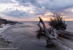 Driftwood Beach (maureen.elliott) Tags: landscape sunrise water driftwood logs skies clouds lakeerie wheatleyprovincialpark shoreline greatlakes spring abigfave